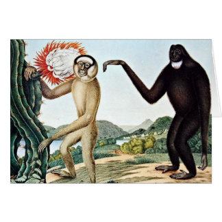 Arte de Hoolock Gibbons (Zotl) Tarjeton