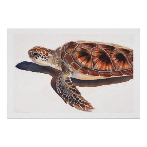 Arte de la acuarela de la fauna de la tortuga de m póster