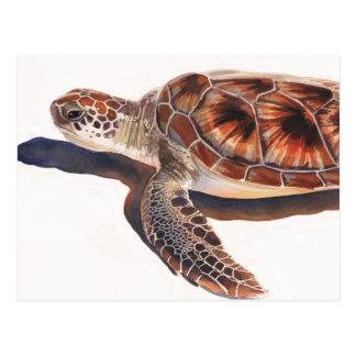 Arte de la acuarela de la fauna de la tortuga de m tarjeta postal