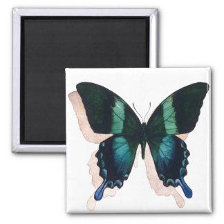 """Arte de la acuarela del insecto de la """"mariposa az imán de frigorífico"""