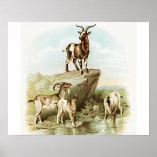 Arte de la cabra de la granja del vintage impresiones