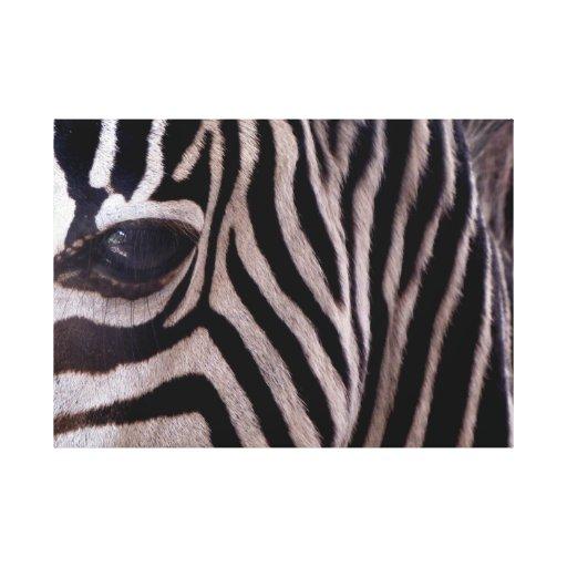 Arte de la cebra impresion de lienzo