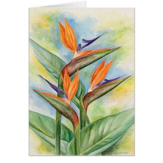 Arte de la flor de la ave del paraíso - multi tarjeta de felicitación
