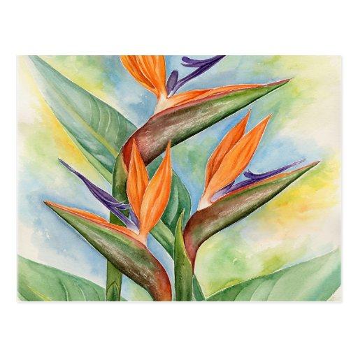Arte de la flor de la ave del paraíso - multi tarjeta postal