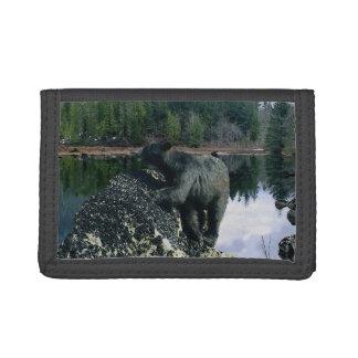 Arte de la foto del oso negro y de la fauna de la