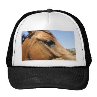 Arte de la fotografía de la cabeza de caballo gorro