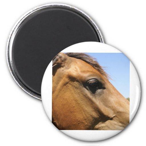 Arte de la fotografía de la cabeza de caballo imán redondo 5 cm