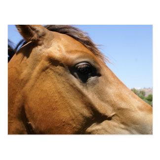 Arte de la fotografía de la cabeza de caballo postales