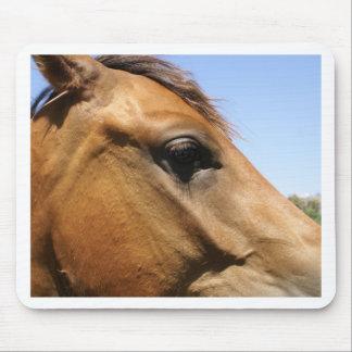 Arte de la fotografía de la cabeza de caballo tapetes de ratones
