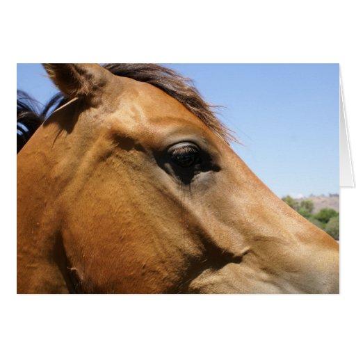 Arte de la fotografía de la cabeza de caballo tarjeta