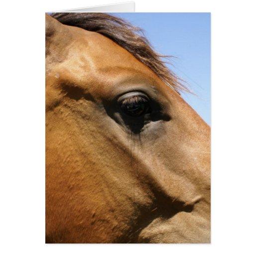 Arte de la fotografía de la cabeza de caballo tarjetón