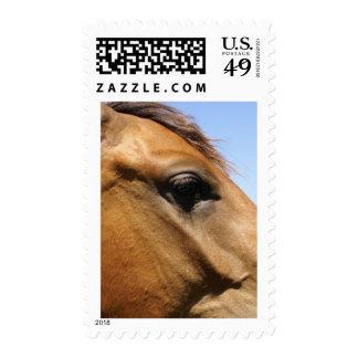Arte de la fotografía de la cabeza de caballo timbres postales