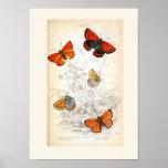 Arte de la mariposa del vintage posters