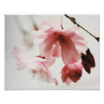 Arte de la pared de la flor de cerezo impresiones