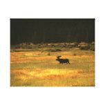 Arte de la pared de los alces de Yellowstone Bull Impresión En Lona Estirada