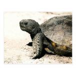 Arte de la tortuga de Gopher Postal