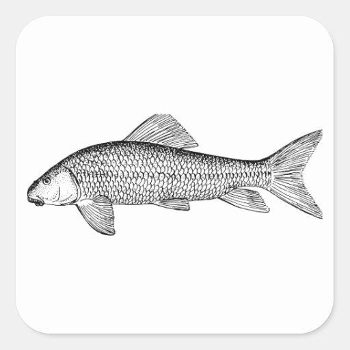 Arte de los pescados del lechón calcomanía cuadradase