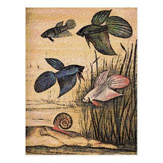Arte de los pescados tarjetas postales