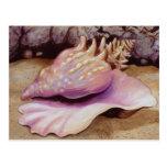 Arte de Shell del mar de la concha de la reina Postal