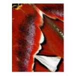 Arte del ala de la mariposa del atlas de Attacus Postal