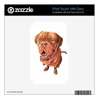 Arte del animal del dibujo del perro del mastín iPod touch 4G calcomanías