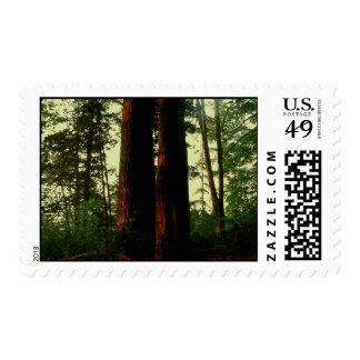 Arte del árbol envio