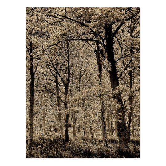 Arte del bosque postales
