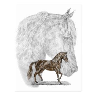 Arte del caballo de Paso Fino Tarjeta Postal