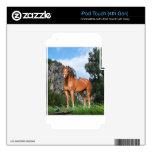 Arte del caballo iPod touch 4G calcomanías
