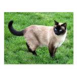 Arte del destino del gatito del maullido del ronro tarjeta postal