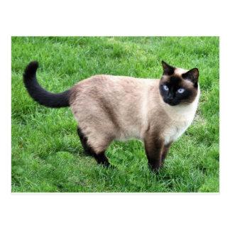 Arte del destino del gatito del maullido del postal