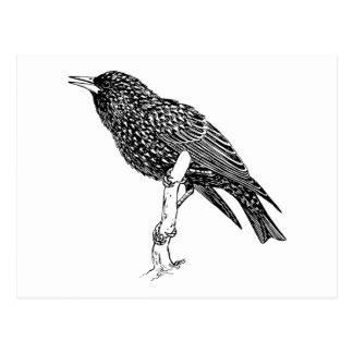 Arte del dibujo animado del pájaro de Starling Postales