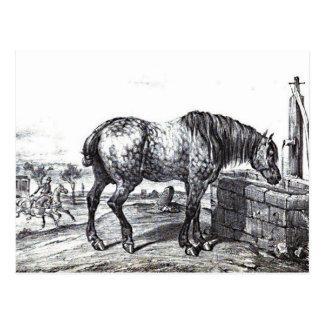 Arte del dibujo del vintage del caballo de Percher Tarjeta Postal
