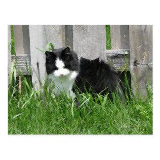 Arte del gato de la granja postales
