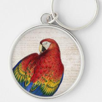 Arte del Macaw del escarlata del vintage