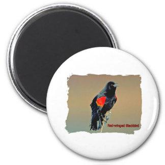 Arte del mirlo de alas rojas imán redondo 5 cm