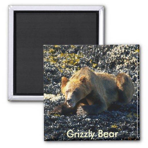 Arte del oso grizzly imán para frigorifico