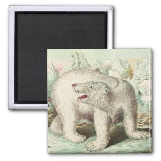 Arte del oso polar del vintage imán cuadrado