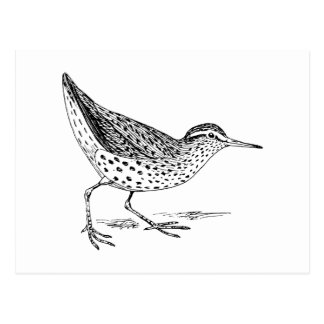 Arte del pájaro de la lavandera postal