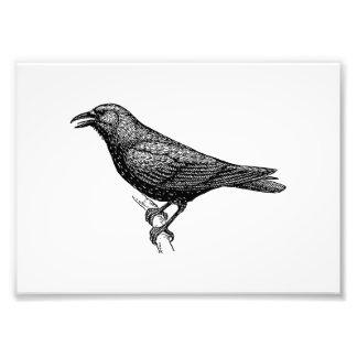 Arte del pájaro del cuervo cojinete