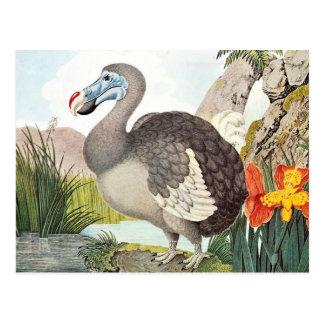 Arte del pájaro del Dodo del vintage Postal