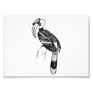 Arte del pájaro del Hornbill Fotografia