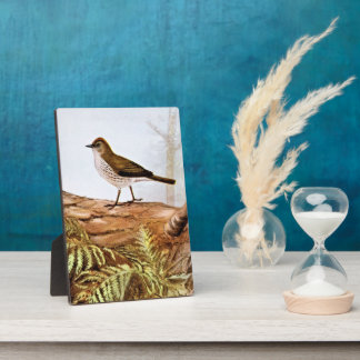 Arte del pájaro del vintage del Ovenbird Placa Para Mostrar