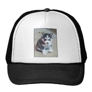 Arte del perrito del husky siberiano gorras
