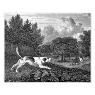 Arte del perro del corredor de cross viejo fotografías