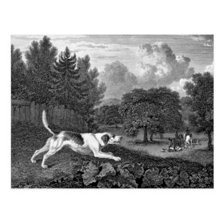 Arte del perro del corredor de cross viejo tarjeta postal