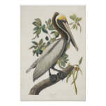 Arte del poster del pelícano de Audubon Brown del