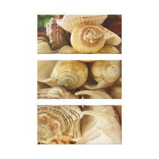 Arte del tríptico de la lona de los Seashells Impresión De Lienzo