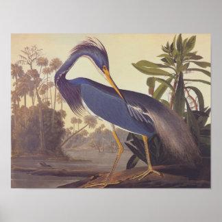 Arte del vintage de Audubon de la garza de Póster