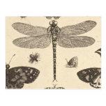 Arte del vintage de la libélula (detalle) postal